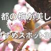 【2020年最新版】京都の梅が美しい名所おすすめスポット30選