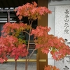 今年2016年に行く予定の京都の紅葉