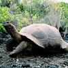 旅のキヲク③ エクアドル ガラパゴス諸島 トータルバランスに優れた世界自然遺産第一号!その1