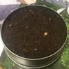 サボテン 種植えてから18日の状況