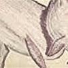 (改訂版)イルカのココロ