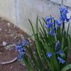 やっと春が来た