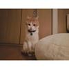 【猫画像】くま殺人事件【飼い猫との話です】