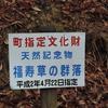 復活!大豊町南大王集落の福寿草まつりに行ってきました