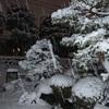 雪と寒波と