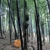 ひっそりした竹藪
