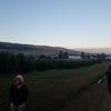 ファームのお仕事 タスマニアでチェリーピッキング