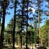 5月のキャンプ。