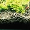 30cmキューブ 水ゲジのエビ葬