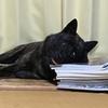 甲斐犬サンのマイペース日記 (*´﹃`*)