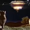 歴代ミャオ・ミックスCMソング /  Meow Mix Commercial History (1974-Present)