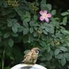野鳥の少ない季節(靭公園探鳥2018/05/24-2018/07/09)