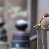 前鳥神社で見られる「鳥」