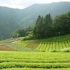 パッチワークの茶畑