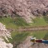 千鳥ヶ淵の開花状況2017(2017/4/5朝)