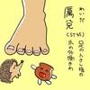 胃経(ST)45   厲兌(れいだ)
