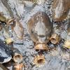 日光江戸村|鯉のエサやりが楽しい!穴場スポット:栃木県日光市