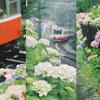 雨のアジサイと箱根登山鉄道と大きなフィルムカメラ(EOS 7)