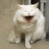 ガーデンバリアは効果なし?!野良猫に一番効果的なのは