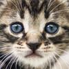 偏食でキャットフードをあまり食べない子猫を4→6カ月まで育てたフードの記録