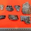 21年前に発見されたカメの化石は新種のカメだった。