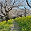 北本自然観察公園の春