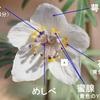 植物に学ぶ生存戦略~再放送が面白い!戦略を詳しく解説します!~セツブンソウの生存戦略〜おとなの自然観察&撮影〜