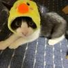 保護猫 逸斗の様子・2(*´Д`)&少々雑談