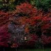 佐賀県で紅葉を撮ってきた!!~1日目 御船山楽園~