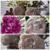 5月、6月のお花と旬の美味しいもの!