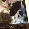 画面が割れていても大丈夫、iPhoneの見るも無残なその姿。