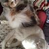 【ネコ】もふもふのお尻