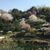 和歌山海南市『わんぱく公園』の遊具、ランチ、駐車場についてのご紹介