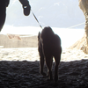 犬の飼い主の危険な独占欲