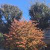 令和元年秋 紅葉が始まりました!