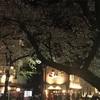 京都木屋町 祇園白川 お花見レポート!