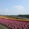 【陸マイラー歴2ヶ月】完全無料の4月 北海道 家族旅行を予約完了