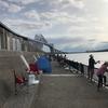 若洲海浜公園 釣果 2017年8月13日