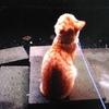 【猫の恋愛】ナッツの元カノみーちゃん