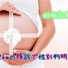 妊娠記録☆26wの健診で性別判明!!!