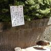 アル・プラザ金沢の正面玄関前の噴水に野生の鴨が住み着いたそうです(笑)