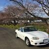 【NB6C】桜並木を求めて