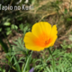 オモのお墓に咲く花とブログの更新