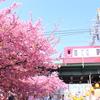 【京浜急行線】2019年最初の花見は三浦海岸の河津桜でスタート!【三浦1DAY・2DAYきっぷ】