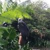 フィリピン最大級の動物園〜Avilon Zoo