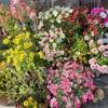 お花とおしゃべり
