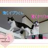 猫ちゃんのお写真紹介.第25段