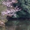 【写真】最近の写真撮影(2017/4/8)明石公園その1