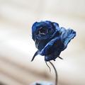 母が大切に飾っている【青いバラのドライフラワー】を撮影してみました。