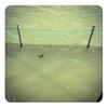 ここで一句。古池や 亀しゃん泳ぐ 昼下がり
